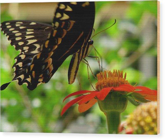 Butterfly And The Flower Wood Print by Dottie Dees