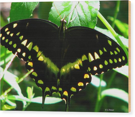 Butterfly Art 3 Wood Print by Greg Patzer
