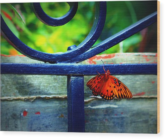 Butterfly At The Gate Wood Print