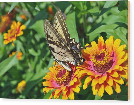 Butterfly Beauty Wood Print by Dion Baker