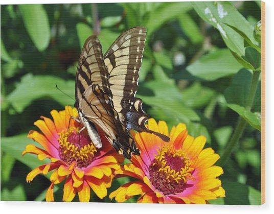Butterfly Beauty II Wood Print by Elizabeth Del Rosario-Baker