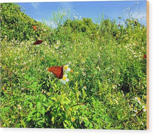 Butterfly Bonanza Wood Print