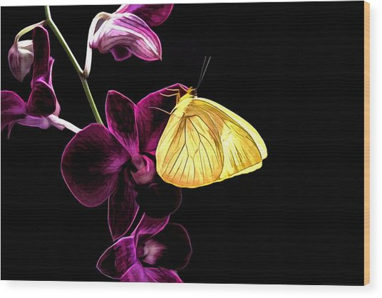 Butterfly Brilliance Wood Print