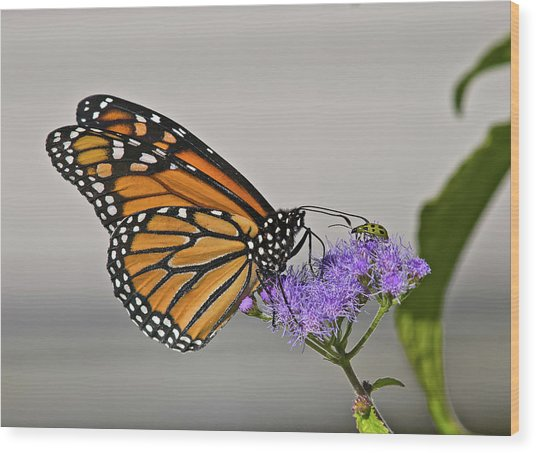 Butterfly Bug Inspector Wood Print