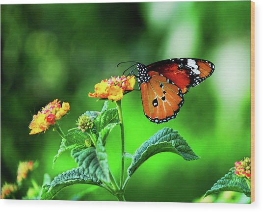 Butterfly Wood Print by Chaza Abou El Khair