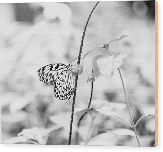 Butterfly Eatting  Wood Print