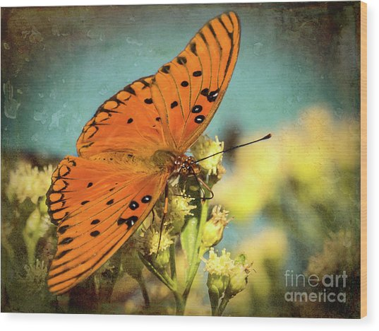 Butterfly Enjoying The Nectar Wood Print