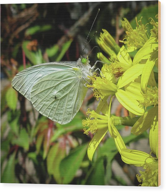 Butterfly Feasting On Yellow Flowers Wood Print