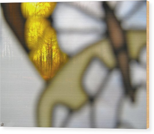 Butterfly Forest  B Wood Print by Debra     Vatalaro