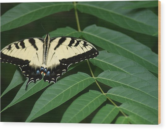 Butterfly Wood Print by Heather Green