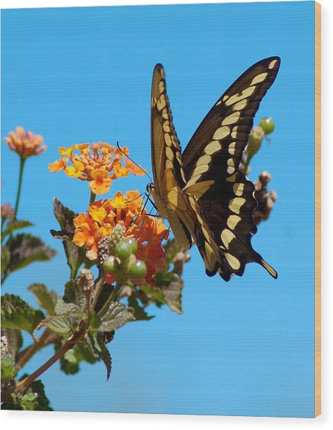 Butterfly IIi Wood Print by Susan Heller