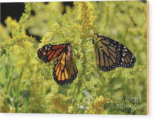 Butterfly In Fall  Wood Print