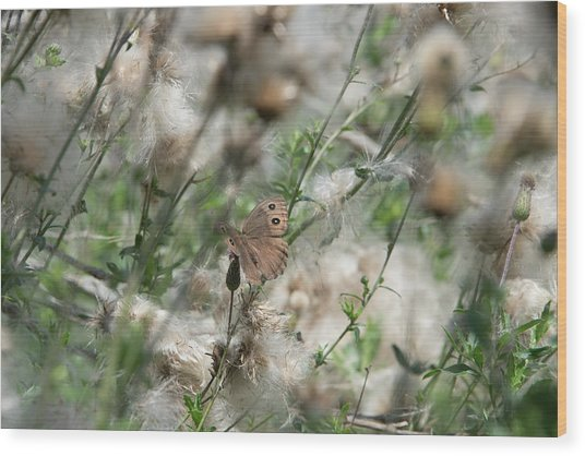 Butterfly In Puffy Seed Heads Wood Print