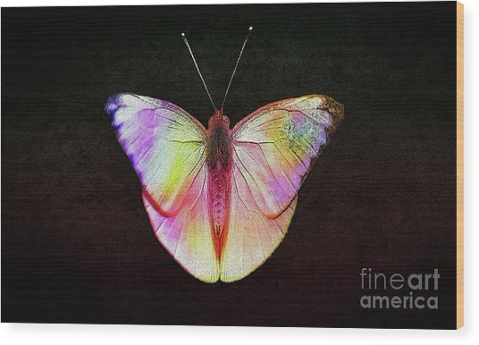 Butterfly In Retro  Wood Print