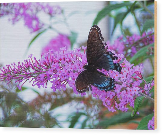 Butterfly Kisses Wood Print by JAMART Photography