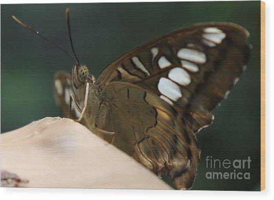 Butterfly Macro Wood Print