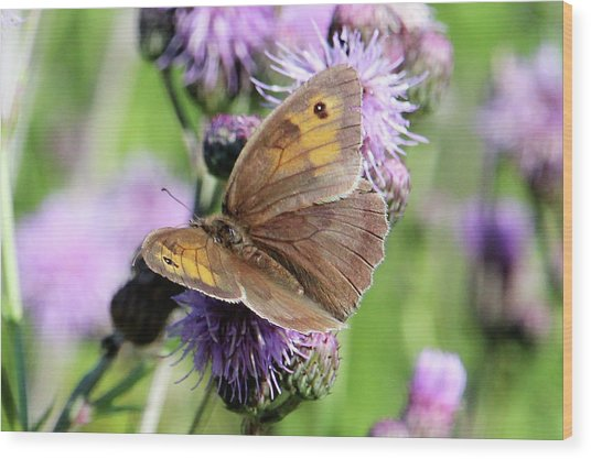 Butterfly Photograph  Wood Print