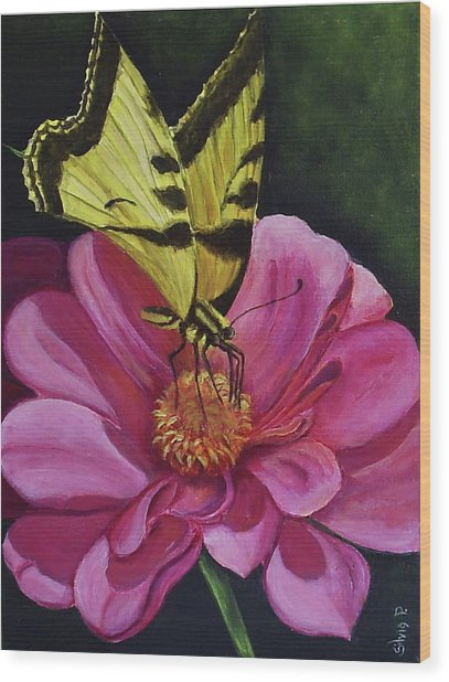 Butterfly On A Pink Daisy Wood Print by Silvia Philippsohn