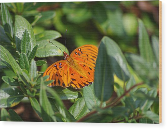 Butterfly On A Sunny Day Wood Print