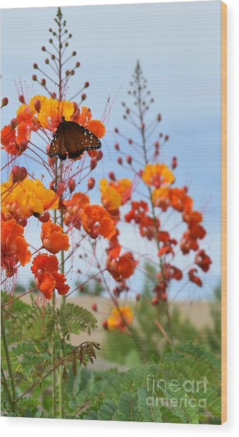 Butterfly On Bird Of Paradise Wood Print