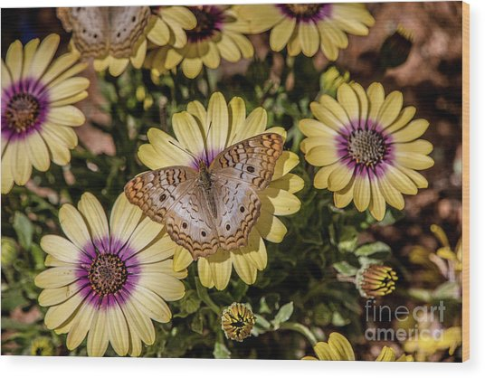 Butterfly On Blossoms Wood Print