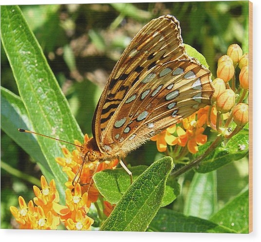 Butterfly On Flower Wood Print by Margaret G Calenda