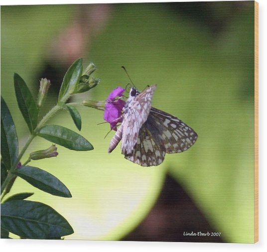 Butterfly On Heather Wood Print by Linda Ebarb
