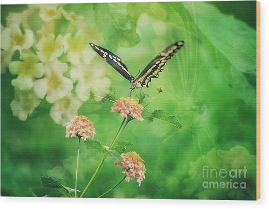 Butterfly On Lantana Montage Wood Print