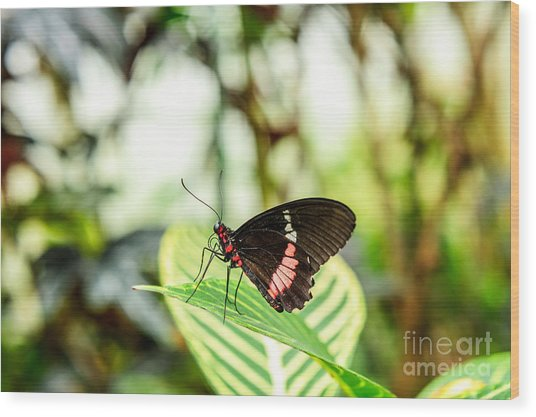 Butterfly On Leaf Wood Print