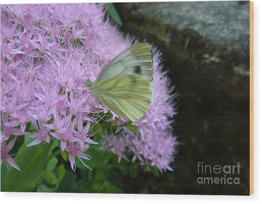 Butterfly On Mauve Flowers Wood Print