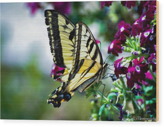 Butterfly On Purple Flowers Wood Print