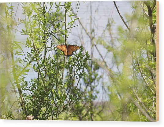 Butterfly On Schrub Wood Print by Thor Sigstedt