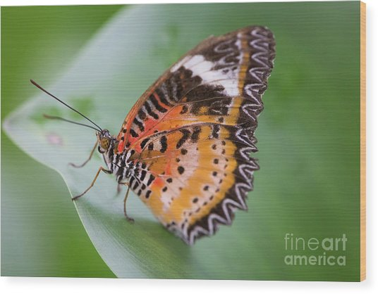 Butterfly On The Edge Of Leaf Wood Print