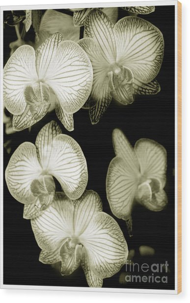Butterfly-orchids Wood Print by Son Of the Moon