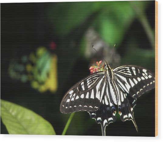 Butterfly Perfect Wood Print by JAMART Photography