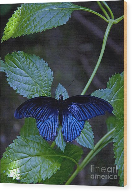 Butterfly Place Wood Print