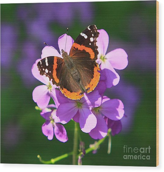 Butterfly Wood Print by Robert Pearson