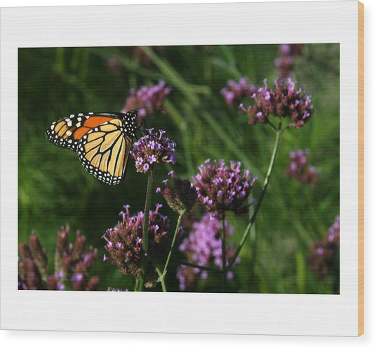 Butterfly Wood Print by Robert Ruscansky