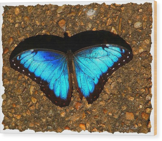 Butterfly Shadow Wood Print by Judy  Waller