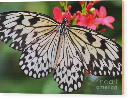 Butterfly Spectacular Wood Print