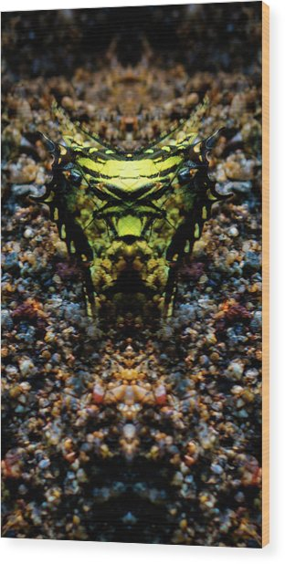 Butterfly Tiger Wood Print