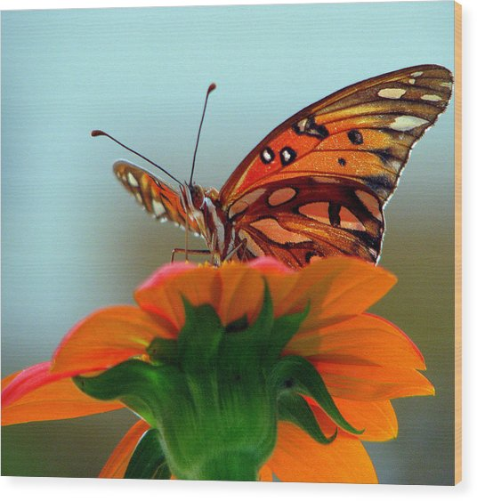 Butterfly View Wood Print by Dottie Dees