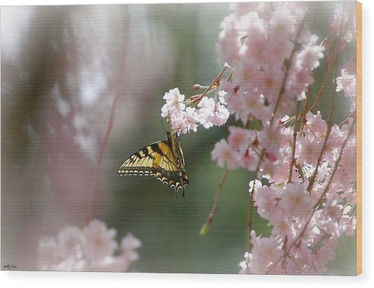 Butterfly With Misty Pink Wood Print by Molly Dean