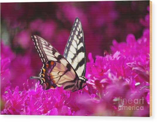 Butterfly1 Wood Print