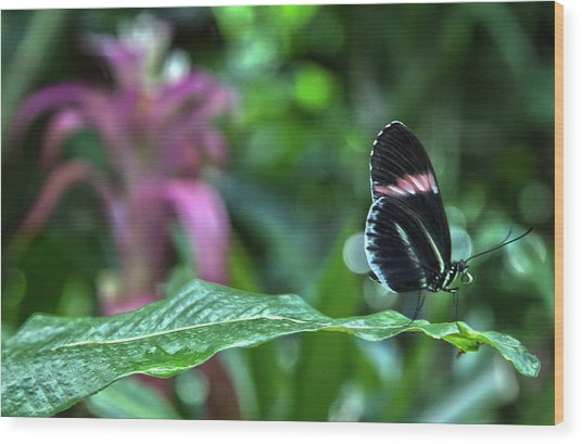 Butterfly3 Wood Print