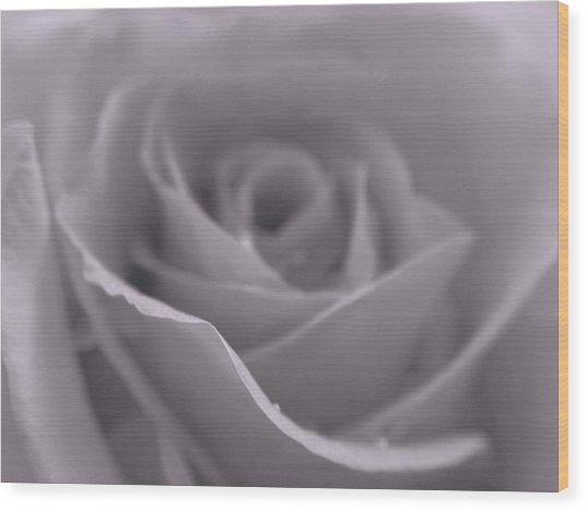 Bw Rose  Wood Print by Juergen Roth