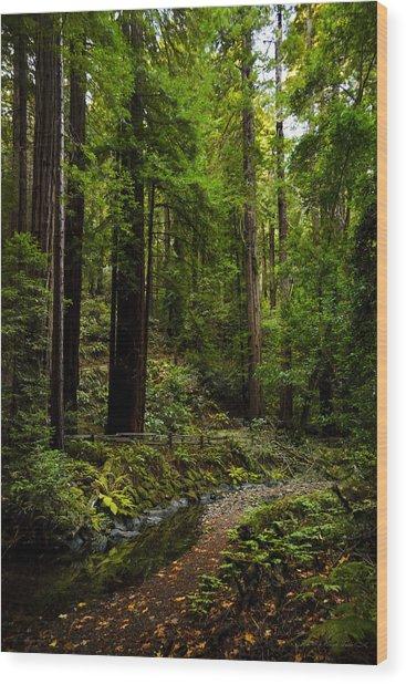 By The Stream In Muir Woods Wood Print