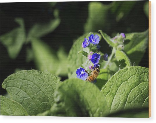 Wood Print featuring the photograph Bzzz... by Helga Novelli
