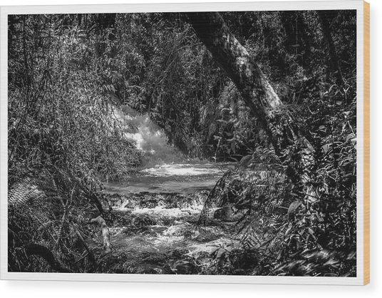 Cachoeira-parque Estadual-horto-campos Do Jordao-sp Wood Print