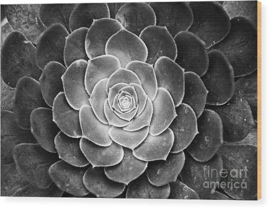 Cactus 18 Deep Bw Wood Print